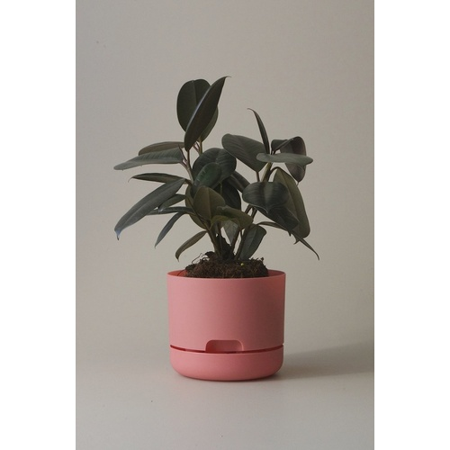 Self Watering Plant Pot 170mm